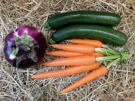 Cucumbers, beet, and carrots on a hay or straw background