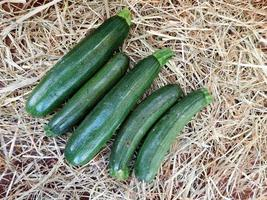 Five zucchinis on a bed of hay or straw