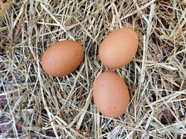 Brown eggs on a hay or straw background