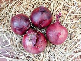 Four red onions on hay or straw