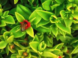 Bee in a flower among green leaves in shrubbery
