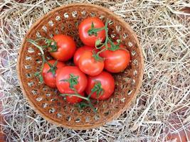 Tomatoes in a wicker basket on a hay or straw background