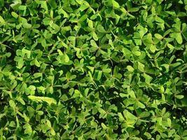 hojas verdes en arbustos foto