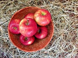 Six apples in a wicker basket on a bed of hay or straw background
