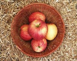Five apples in a wicker basket on a bed of hay or straw background