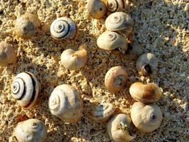 conchas de caracol en la arena foto