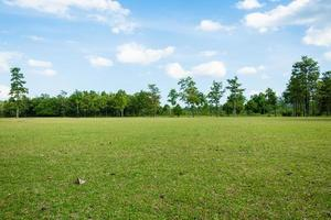 Park with green grass fields with a beautiful park scene background photo