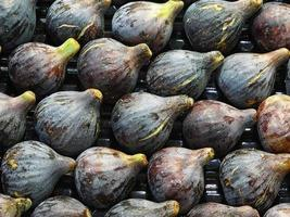 Rows of figs photo
