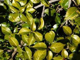 planta verde en un jardín foto