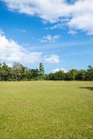 parque con campos de hierba verde con un hermoso fondo de escena de parque foto