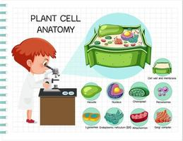 Anatomy of plant cell Biology Diagram vector