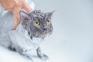 Angry cat in the bathtub
