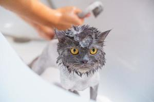 Angry cat in the bathtub photo