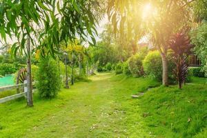 hermoso jardín verde