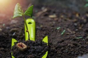 Garden spade in the soil