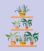 conjunto de plantas de interior en estantes. vector