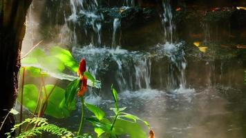 Zoom in on a Misty Garden by A Tropical Waterfall video