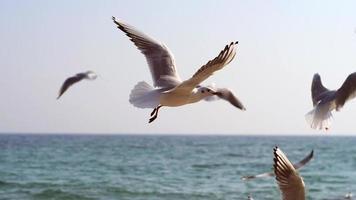 gaivotas voando em câmera lenta