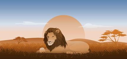 Lion sitting or lying on a grass, wildlife landscape savanna with sunset background, vector illustration