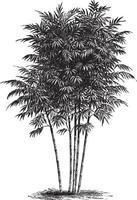 Bamboo Tree Vintage Illustrations vector