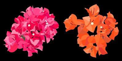 buganvillas rosadas y naranjas sobre fondo oscuro, estilo plano mínimo vectorial vector