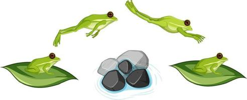 Movement of frog jumping on white background vector