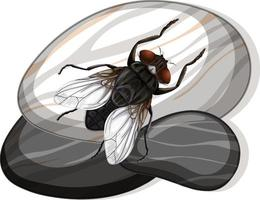 Top view of house fly on a stone on white background vector