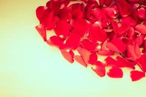 Rose petals with copyspace for text photo
