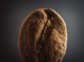 Single coffee bean photo