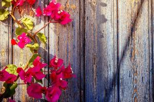 Puerta de madera antigua con buganvillas
