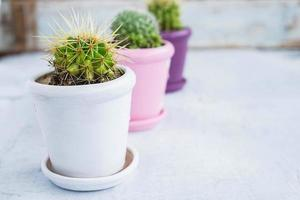 Three cactus plants in pots on a wooden table