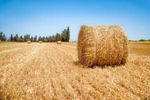 Hay bale on a summer's day