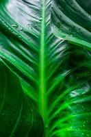 Detail of green leaves photo