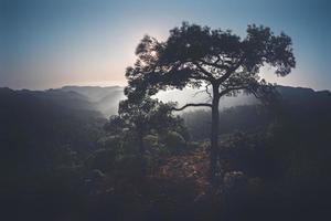 Pino en la cima de la colina de las montañas de Troodos en Chipre