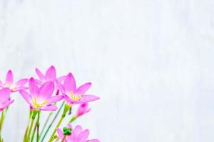 Pink and purple flowers next to a blue wall photo