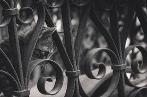 Sad kitten behind park fence