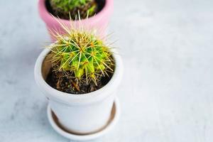 Two cactus plants in pots on a blue wooden table