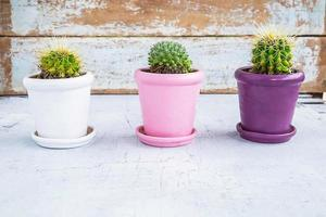 Three cactus plants in pots on a blue wooden table