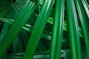 Close-up of green palm leaves photo