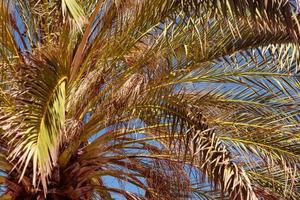 Vista cercana hacia arriba de palmera tropical