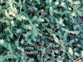 hojas verdes y arbustos foto