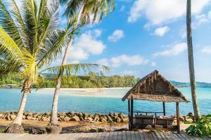 palmeras de coco en la playa