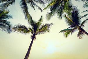 palmeras de coco en la playa foto
