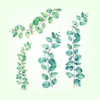 Establecer árbol planta hoja eucalipto acuarela vector
