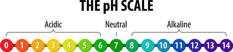 The pH Scale diagram on white background vector