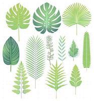Green tropical leaves set vector illustrations