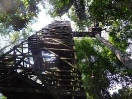 Ladders up to the tree canopy in the Amazon jungle