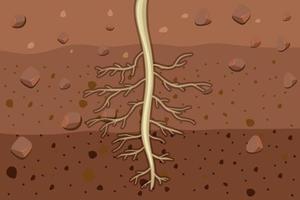 Cerca de las raíces de las plantas en el suelo. vector