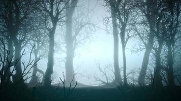 mystieke horror achtergrond met donkerblauw bos en mist abstracte achtergrond