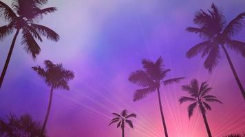 panoramautsikt över tropiskt landskap med palmer och solnedgång, sommarbakgrund